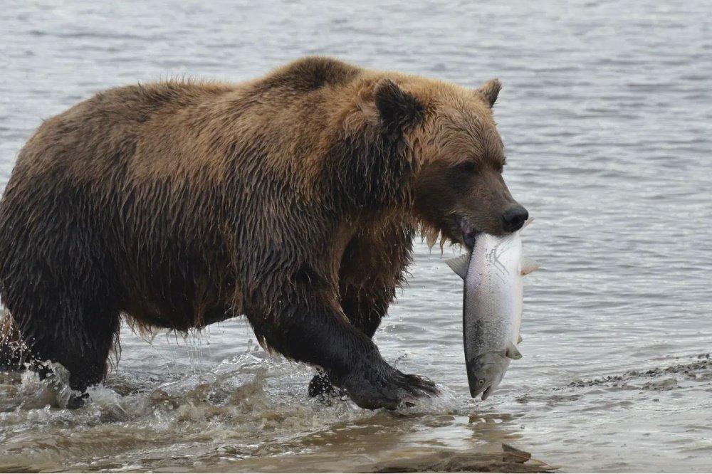 homer bear.jpg
