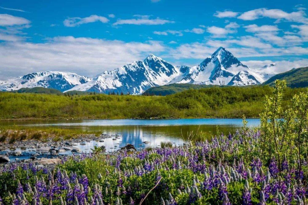 kenai fjords glacier lodge omgeving.jpg