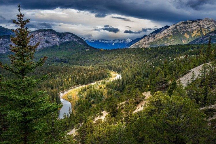banff forest-5900553_1280.jpg