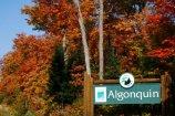 Algonquin Park