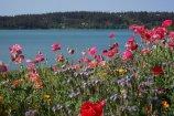 Lac la Hache 001