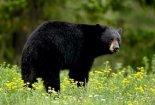 Manning Provincial Park  001